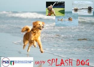 HAPPY Splash Dog 2