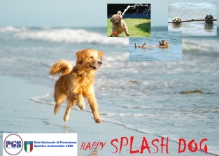 HAPPY Splash Dog 2
