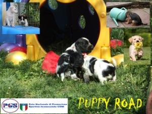Puppy Road